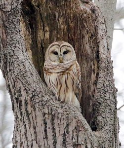 Owl expert Brenda Hente hosts talk at Ottawa Refuge
