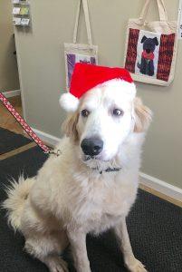 White dog wearing christmas hat