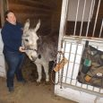 Image of Lindsey Bille with a donkey