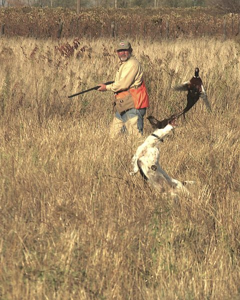 Image of hunter, dog, and pheasant