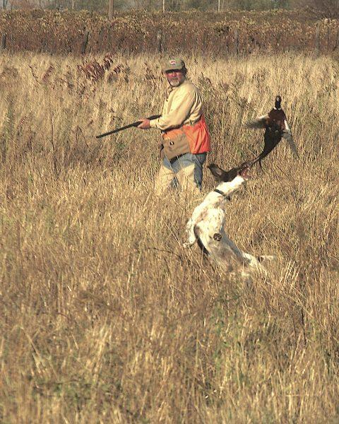 Image of hunter, dog, and pheasant