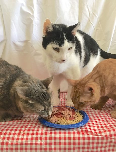 Image of cats eating spaghetti
