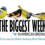 Biggest Week in Birding is canceled
