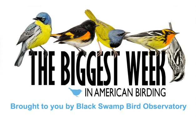 Biggest Week in Birding is canceled