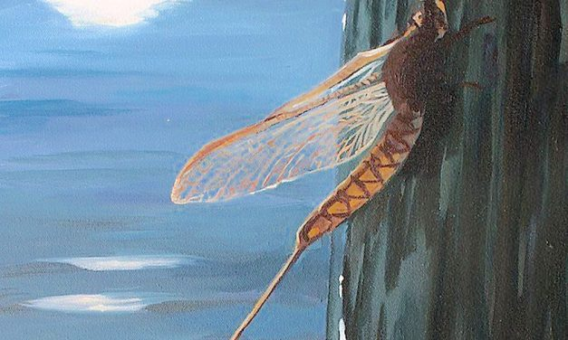 Turn the lights out! Lake Erie's mayfly hatch a Port Clinton happening in June