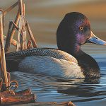 Artist Richard Clifton wins 2020 Federal Duck Stamp Art Contest