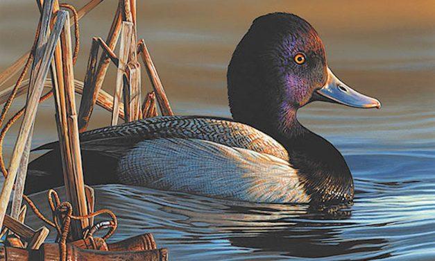 Artist Richard Clifton wins 2020 Federal Duck Stamp Art Contest