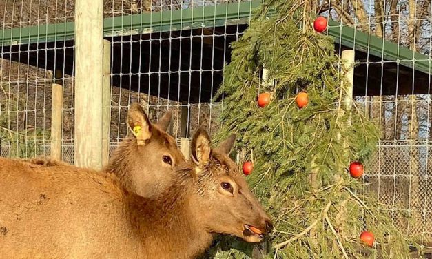Recycle your Christmas tree to benefit wildlife