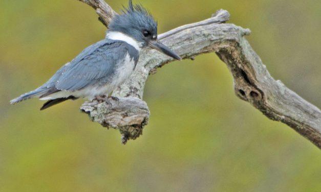 Dianne Rozak's birding photos featured
