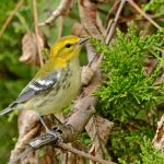 Biggest Week in Birding has wealth of birding hot spots