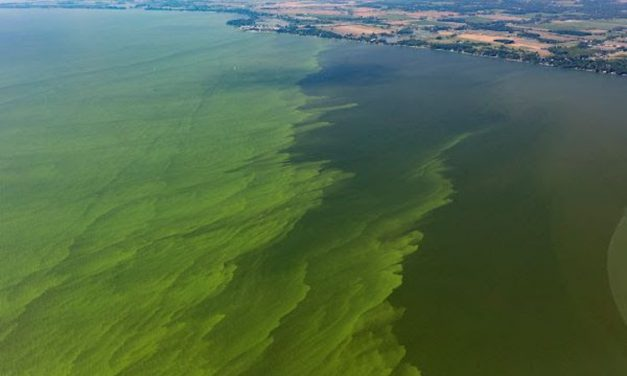 Smaller summer harmful algal bloom of 3 predicted for western Lake Erie