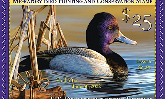 New Federal Duck Stamp now available from USFWS