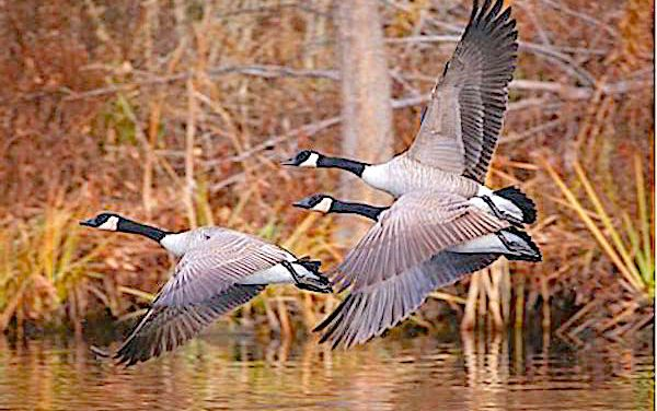 Plan ahead with wildlife agency's help for places to hunt this fall