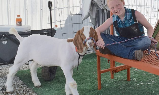 Food, entertainment to draw crowds to 57th Ottawa County Fair